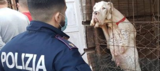 Cane sequestrato Catania